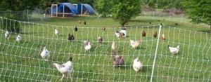tickiwoo farm